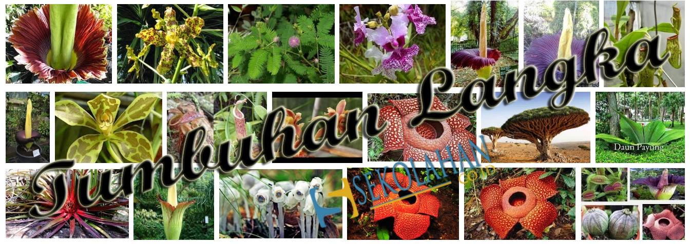 71 Gambar Hewan Dan Tumbuhan Yang Terancam Punah Terbaik