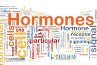 Macam Hormon Penting Dalam Tubuh